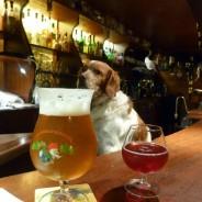 Top 5 des pubs mythiques de marins, par Skippair !