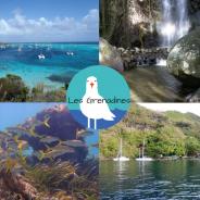 Découvrez le TOP 5 des escales en voilier aux Grenadines