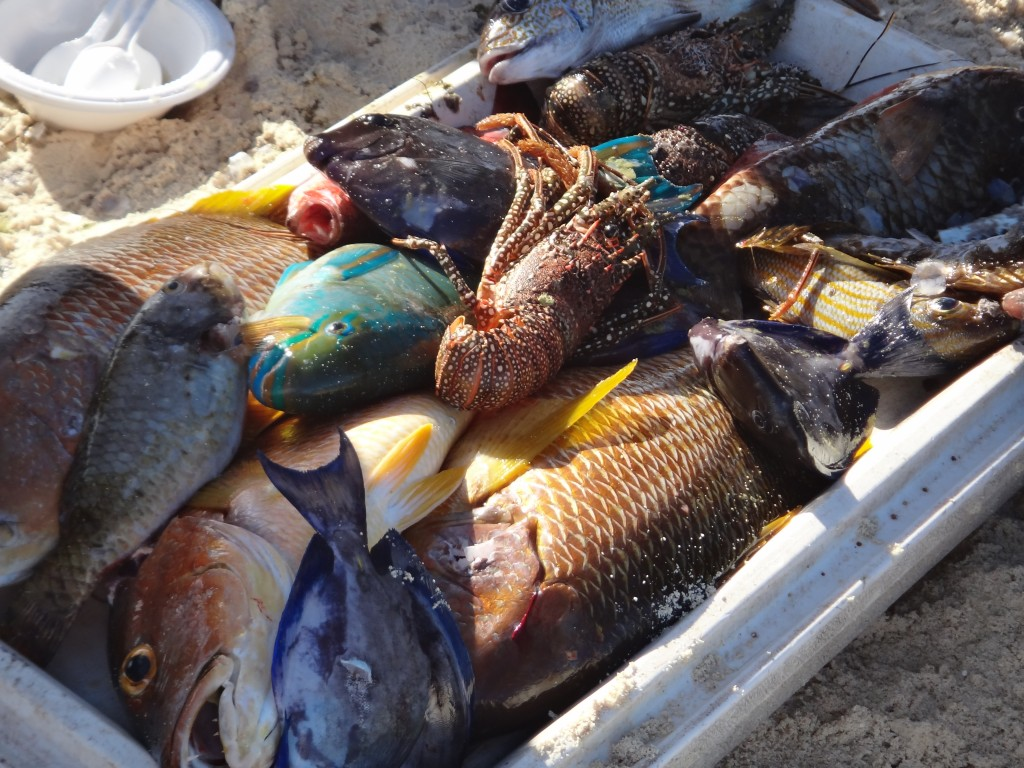 croisiere antilles poissons bien frais