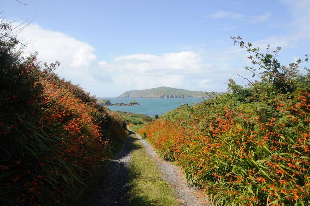Les chemins bordés de fleurs sauvages de Sherkin Island, une étape agréable lors de toute croisière en Irlande - Skippair