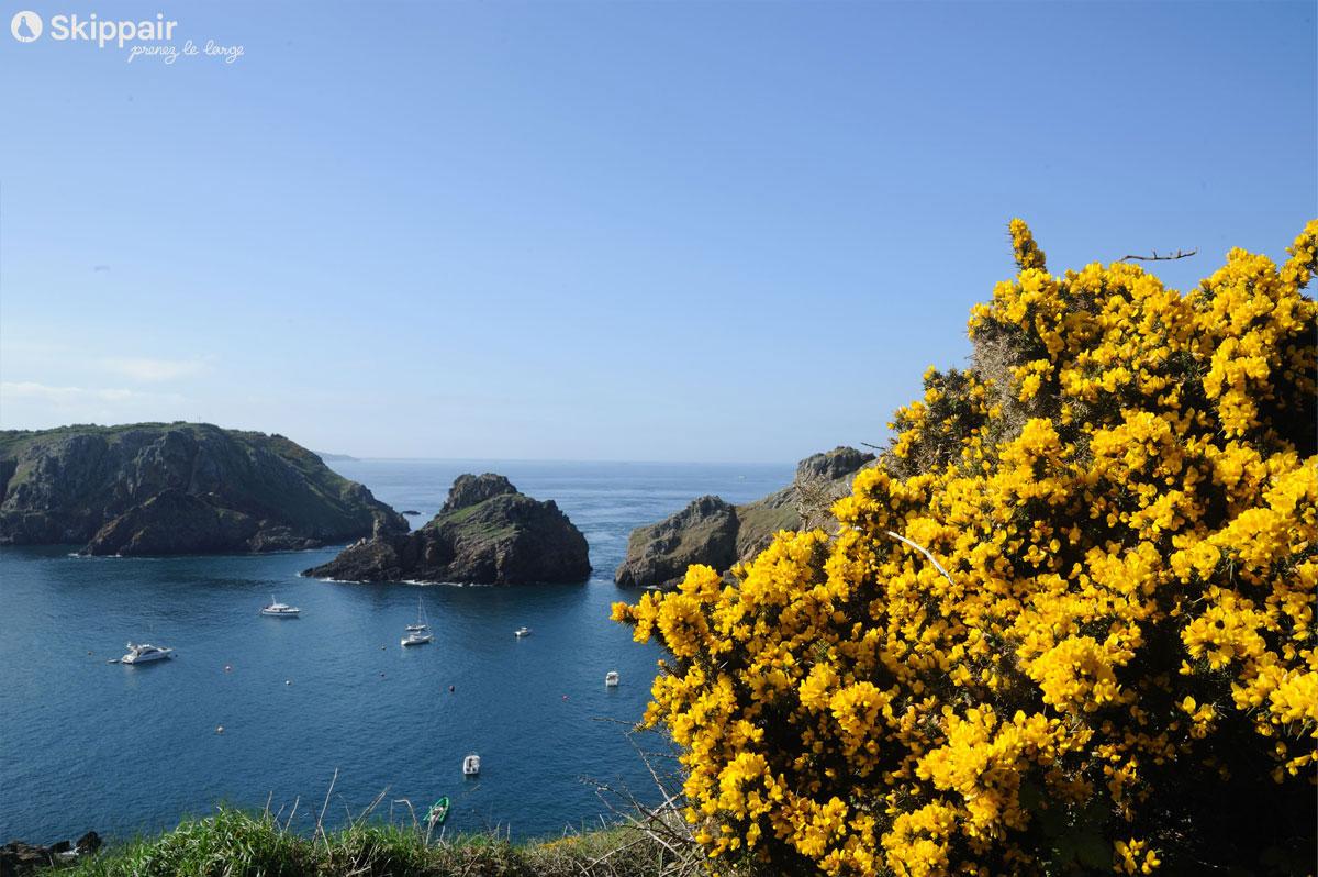 Une anse abritée surplombée de fleurs jaunes, sur l'île de Sercq, ou Sark, dans l'archipel anglo-normand